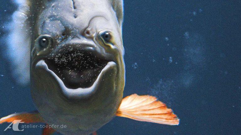 Webdesign Titelbild lachender Fisch