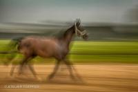 laufendes Pferd Slow Speed fotografischer Impressionismus, impressionistische Fotografie Slow Speed