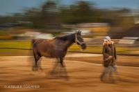 Pferd mit Besitzerin Slow Speedfotografischer Impressionismus, impressionistische Fotografie Slow Speed
