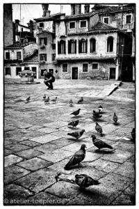 Venedig Hochkontrast-Foto Tauben auf dem Platz