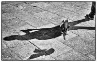 Venedig Highcontrast-Foto Taube