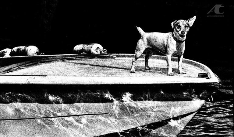 Digitale Hochkontrast-Fotografie Hund